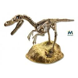 Scheletro di Velociraptor da assemblare